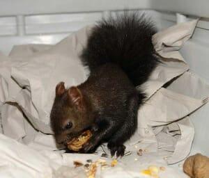 Tierpatenschaft Eichhörnchen