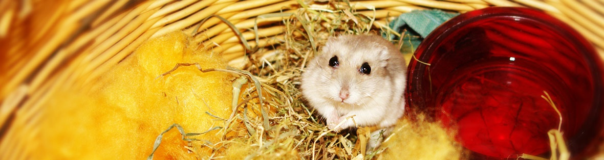 Tierarzt Hamster