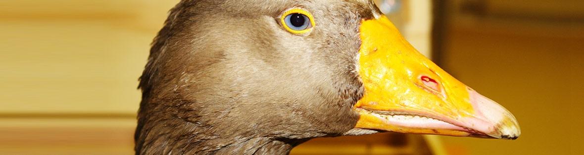 Vogelpraxis München