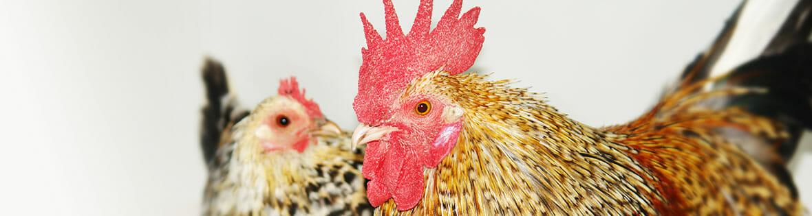 Vogelpraxis & Exotenpraxis