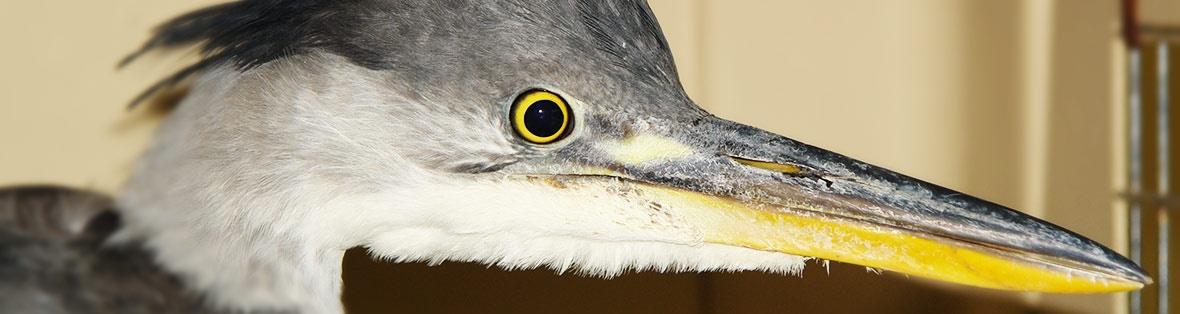 vogel tierarzt
