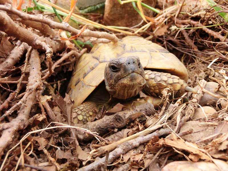 Reptilientierarzt Schildkröte Winterruhe Fachpraxis Dr. Heike Reball