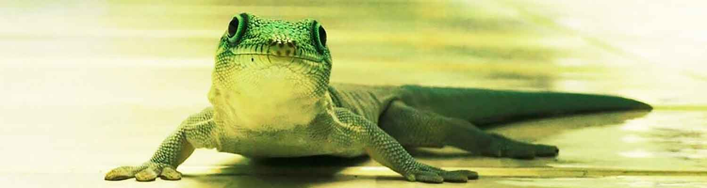 Reptilien Reptil Reptilientierarzt Tierbilder