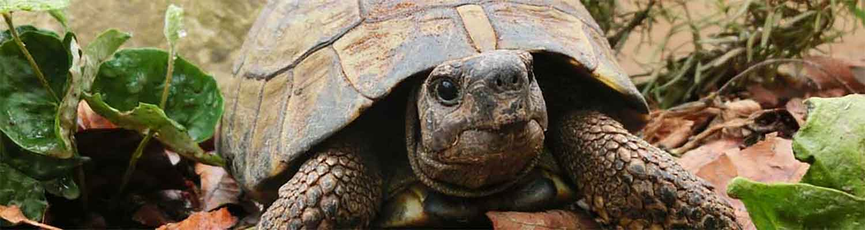 Reptilienpraxis: Reptilien Reptil Reptilientierarzt Tierbilder