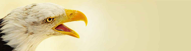 Vogelkundiger Tierarzt