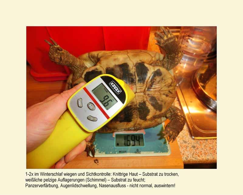 Winterschlaf Überwintern Schildkröten Landschildkröten
